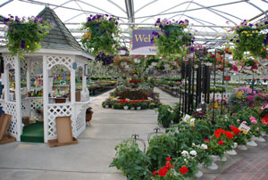 Welcome to Vite Greenhouses!